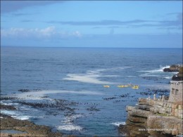 hermanus-photos05