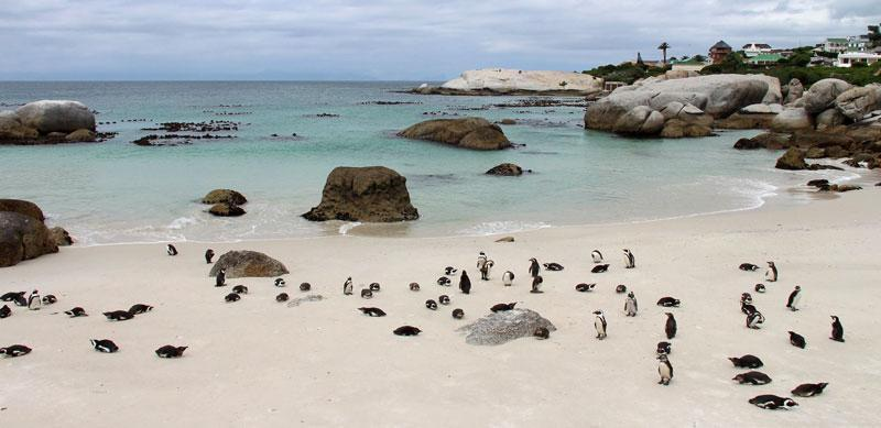 penguins boulderbeach3