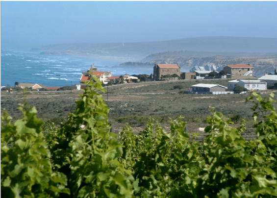 Vineyards with a seaview