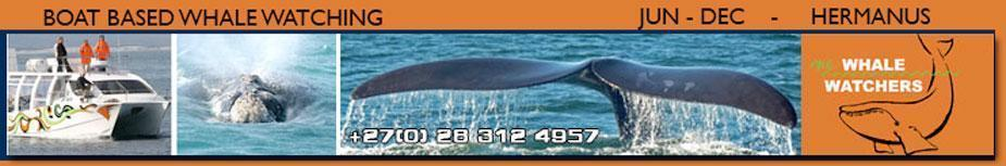 whalewatching header2