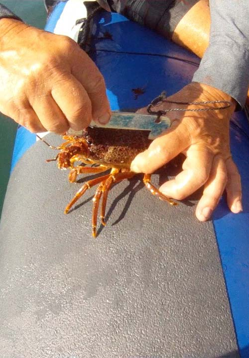kreef crayfish catching side2