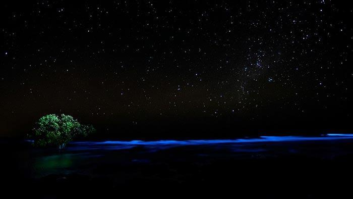 algae bioluminescence lone tree