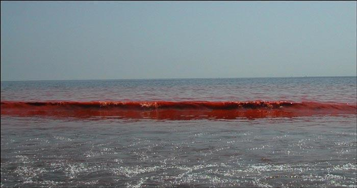 algea red tide waves
