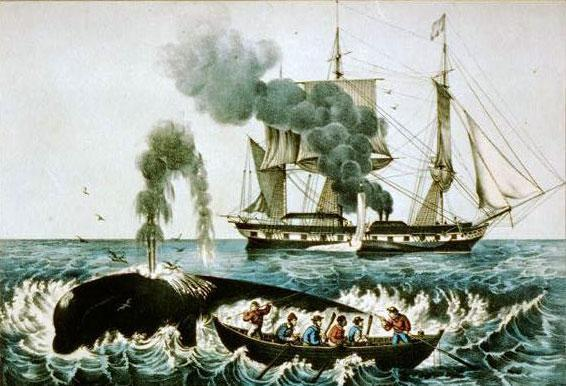 right whale to hunt web