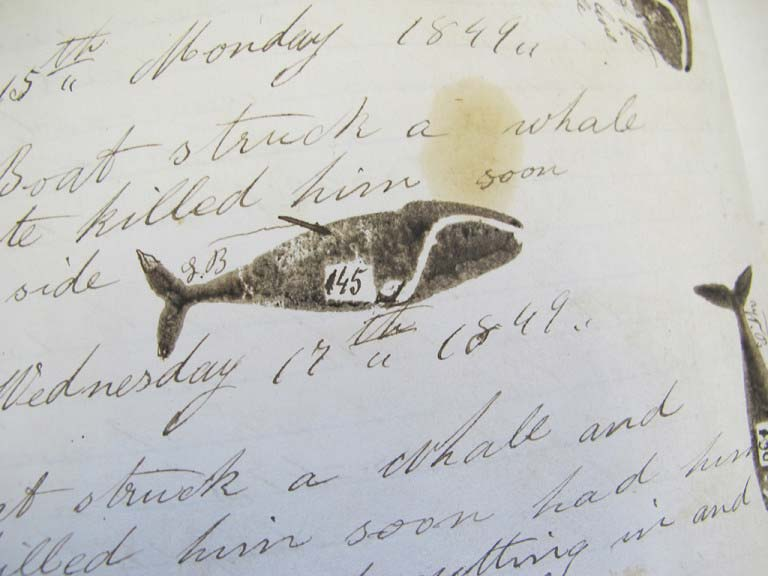 whalinglogWhale illustrated with a stamp in a whaling logbook with the number referring to the gallons of oil from this whale courtesy Marthas Vineyard Museum