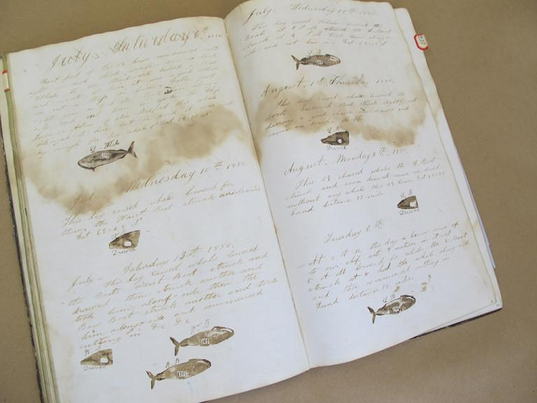 whalinglog logbook waterdamage