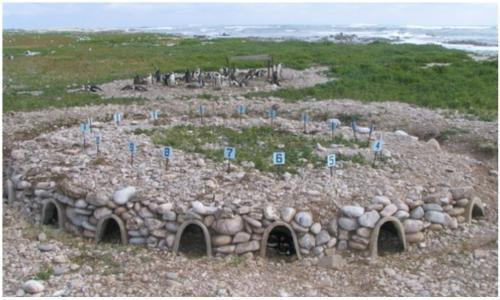 Dyer Island penguin nests 500 x 300