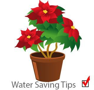 safe water potplant
