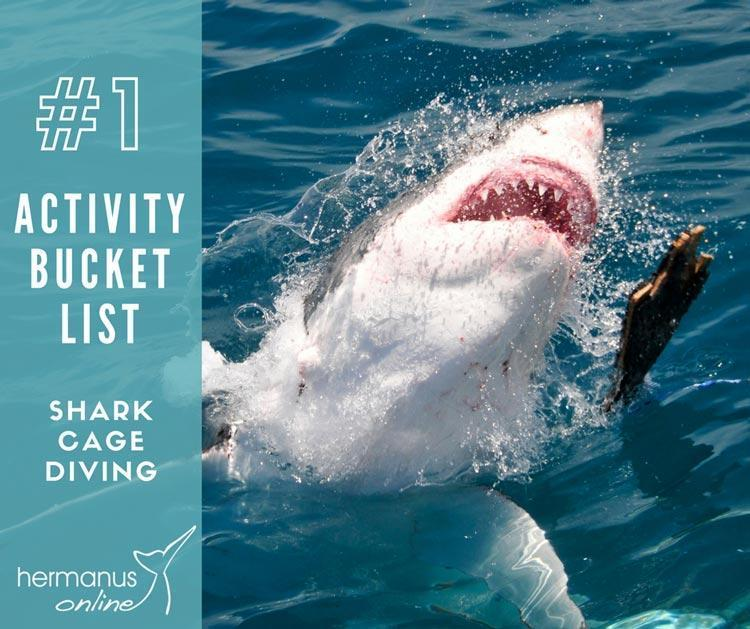 Activity bucketlist 1 shark