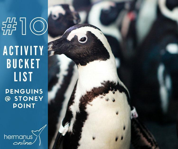 Activity bucketlist 10 penguin