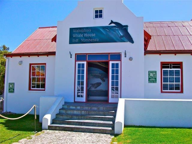 whale museum640