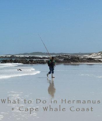hermanus fishing