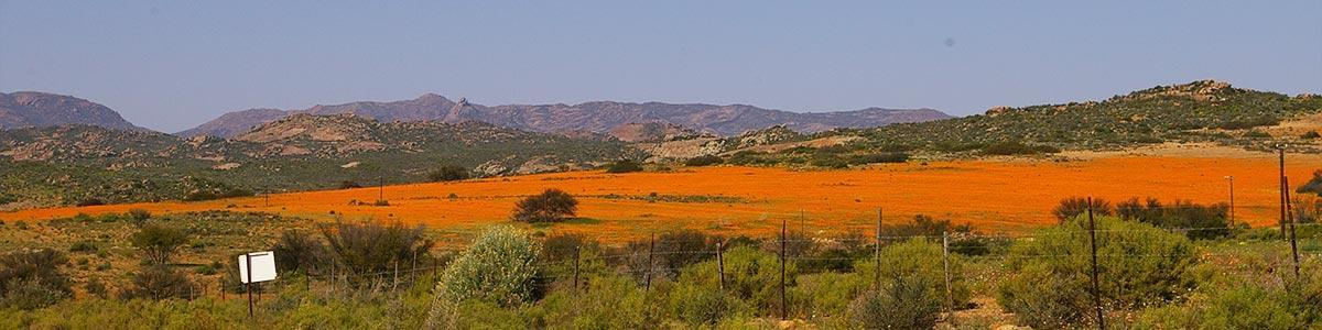 namaqualand header