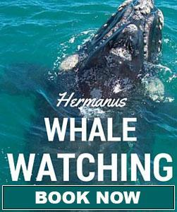 Whale watching book now