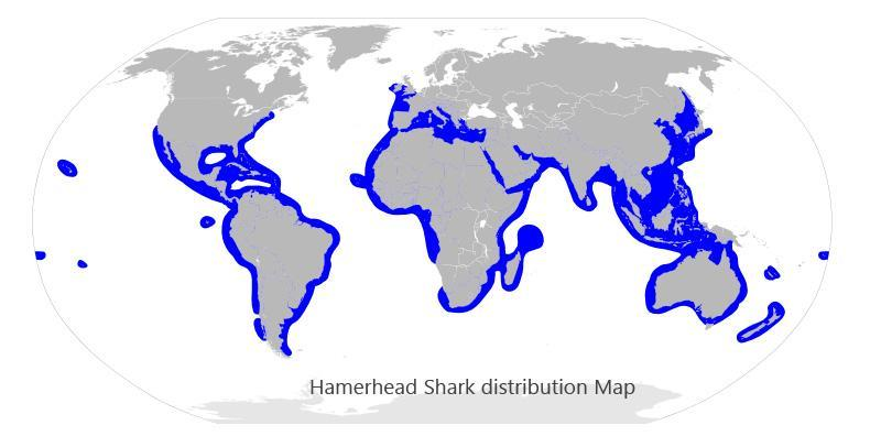 Hammerhead distribution map