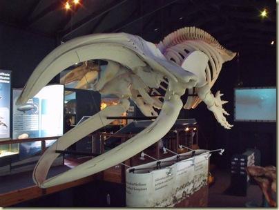 Whale Museum in Hermanus