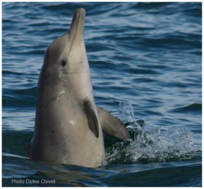 Dolphin Escapes Captivity, Finds Her Family In The Wild And Has A Baby