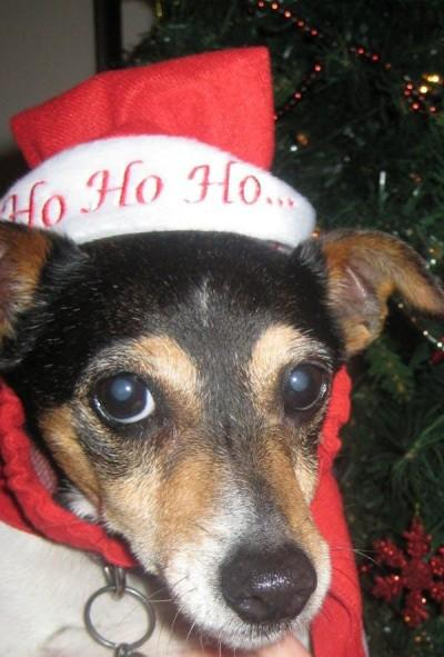 Yes, you can give a pet as a Christmas gift.