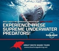 Shark Cage Diving with Great White Shark Tours in South Africa