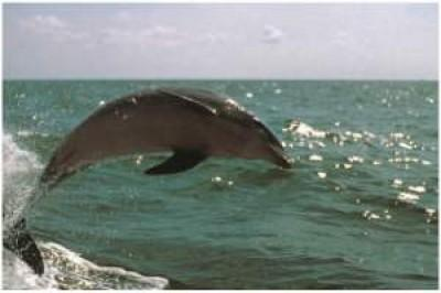 10 Facts you did not know about Bottlenose Dolphins