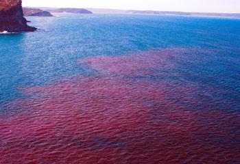 Red Tide, Blue Tide: Bioluminescence in the Ocean