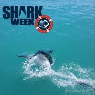 Why it matters how you watch Shark Week
