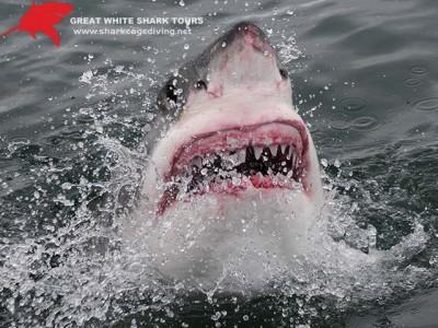 Shark Cage Diving in South Africa. Join the legend Brian McFarlane on Apex Predator