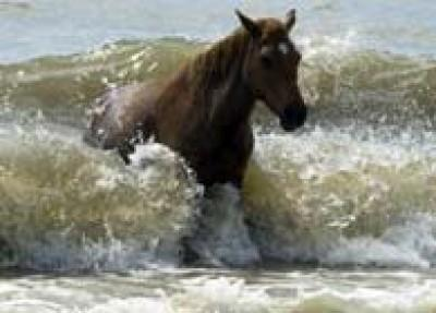 The Birkenhead Horses