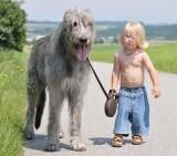 The Top 10 reasons why your child should own a pet