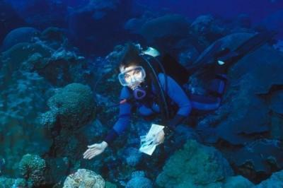 Who is Doctor Sylvia Earle?