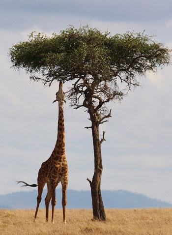 Going on your first safari: 5 dos and don'ts