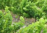 Wine farms and wineries along the Hermanus Wine Route