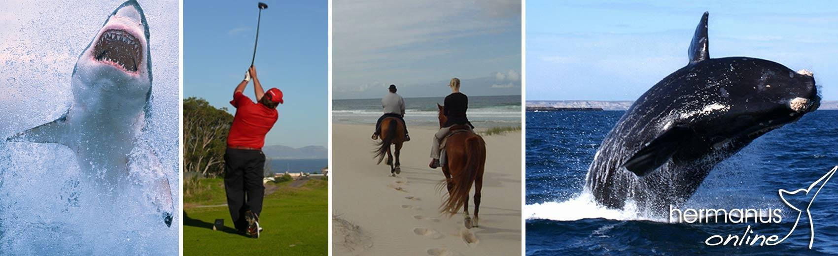 Top Activities - Hermanus