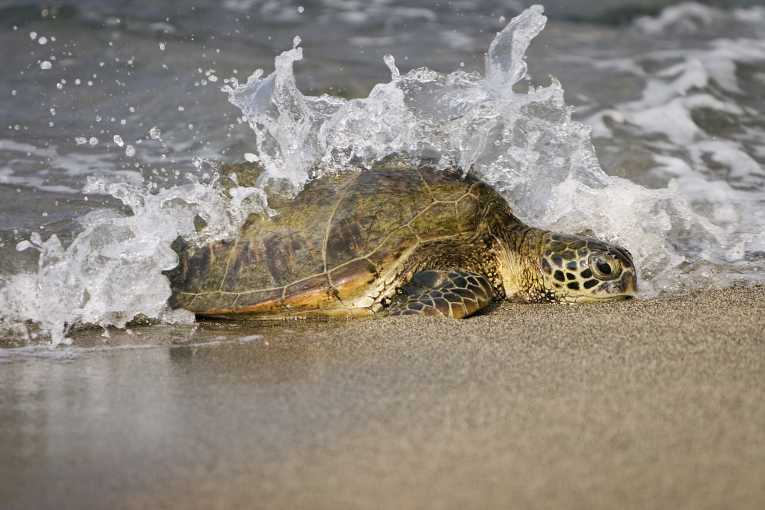 What to do when you find Stranded Loggerhead Sea turtles