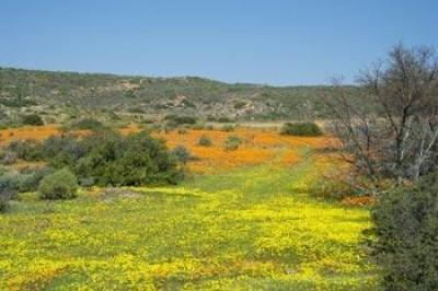 Our Namaqualand Heritage - Namaqua Food Flavour
