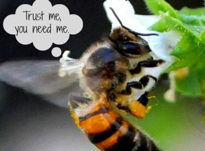 Without Bees our world will be silent –What YOU Can Do to Help