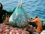"""How overfishing and the """"race to the bottom"""" are affecting us"""