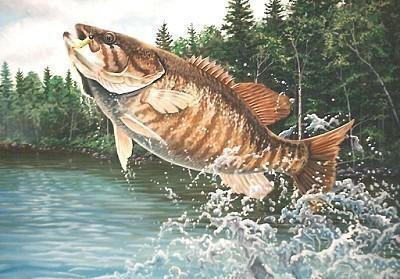 Fishing:  How to Catch Bass All Summer Long