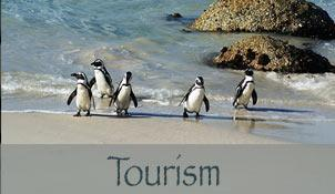 Tourism Hermanus