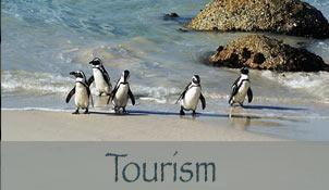 Tourism Hermanus