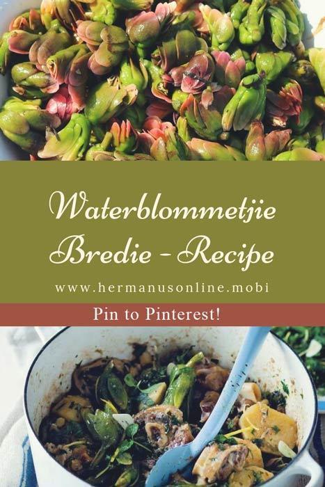 Waterblommetjie Bredie - Recipe