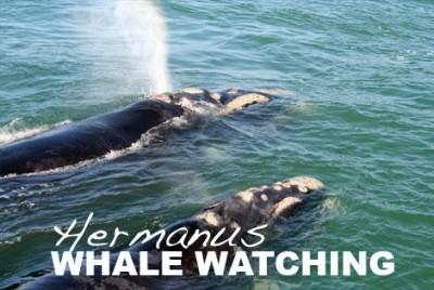 BOOK YOUR WHALE WATCHING TRIP TODAY